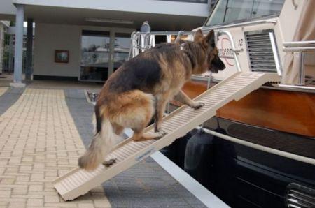 DogStep